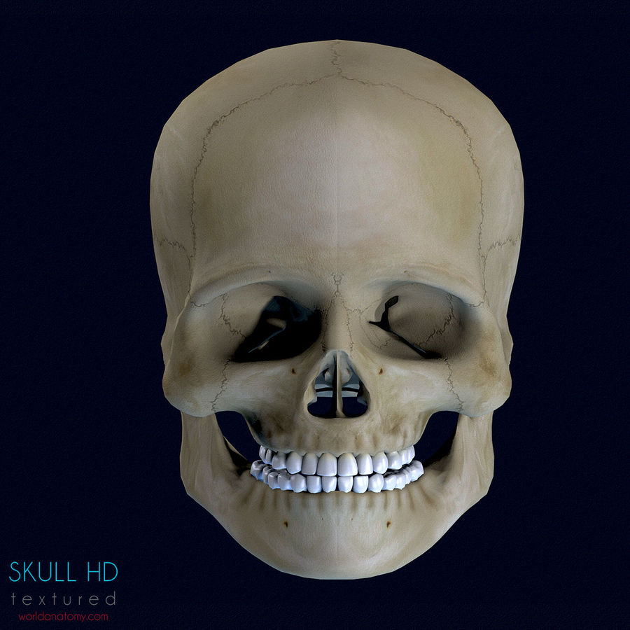 Human Skull Textured royalty-free 3d model - Preview no. 5