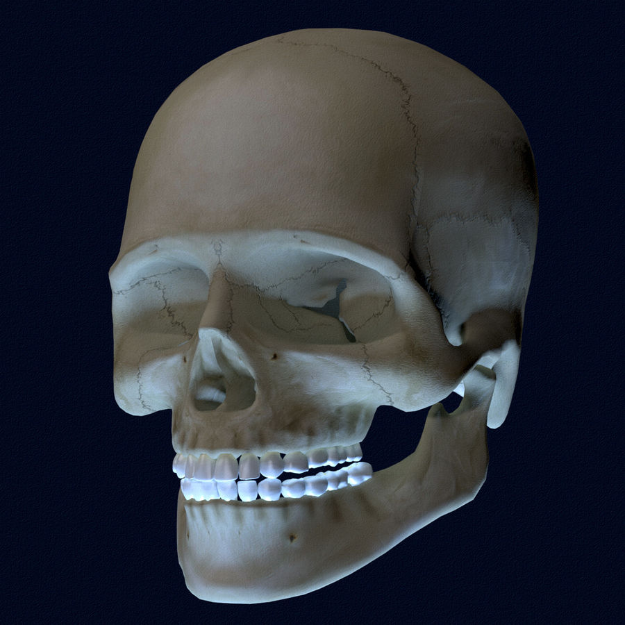 Human Skull Textured royalty-free 3d model - Preview no. 3