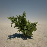 Medium Bush 3d model