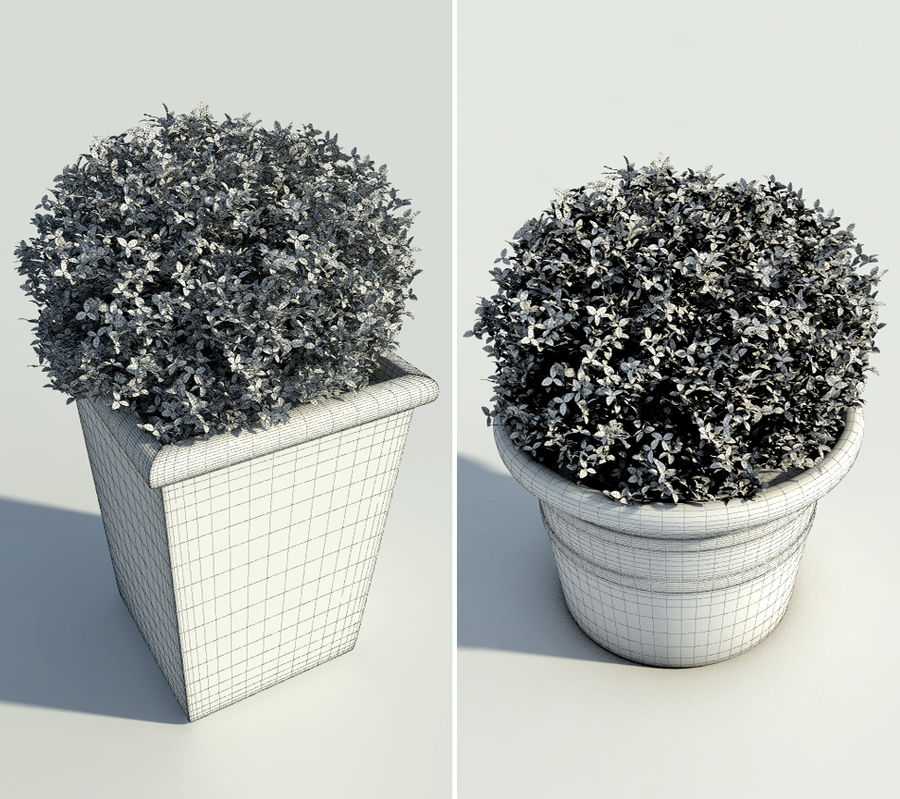 Bushes in pots 2 royalty-free 3d model - Preview no. 7