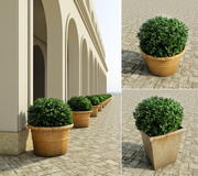 Bushes in pots 2 3d model