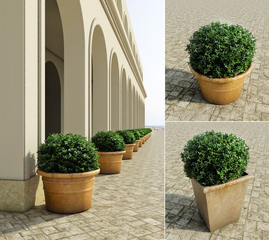 Bushes in pots 2 royalty-free 3d model - Preview no. 1
