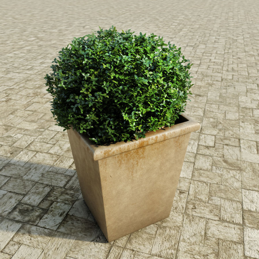 Bushes in pots 2 royalty-free 3d model - Preview no. 3
