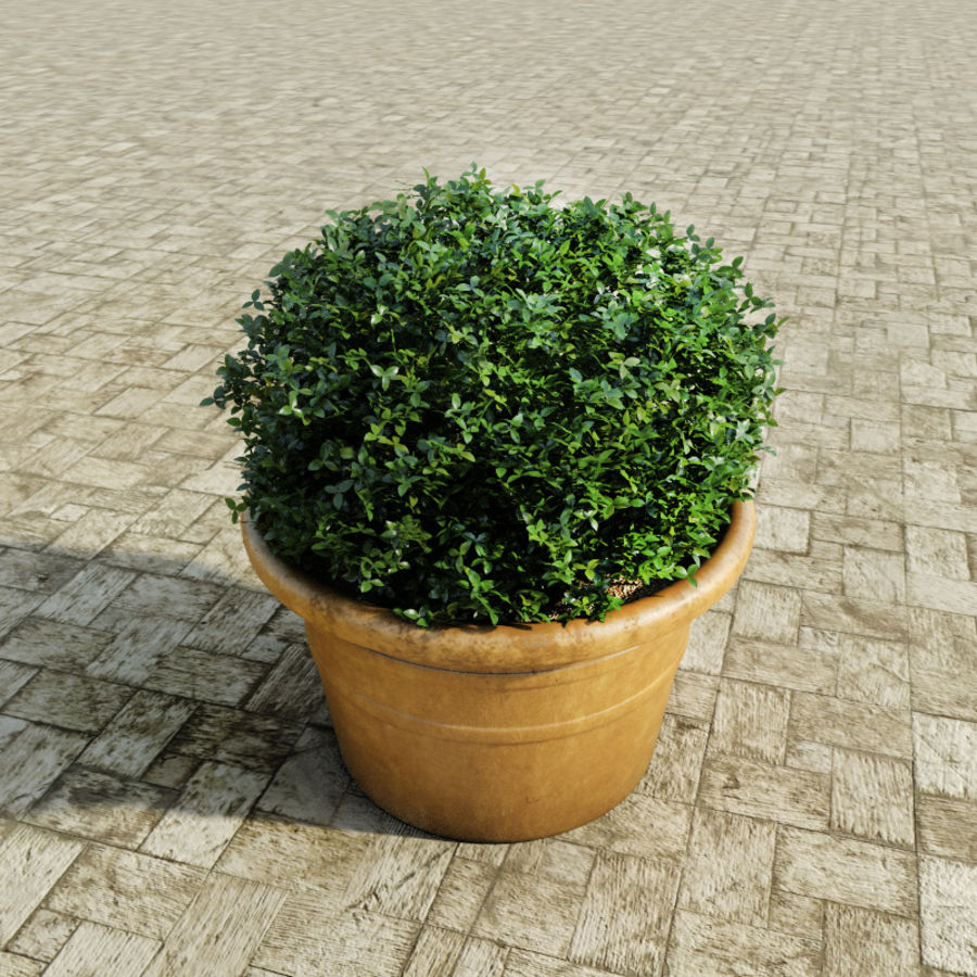 Bushes in pots 2 royalty-free 3d model - Preview no. 4