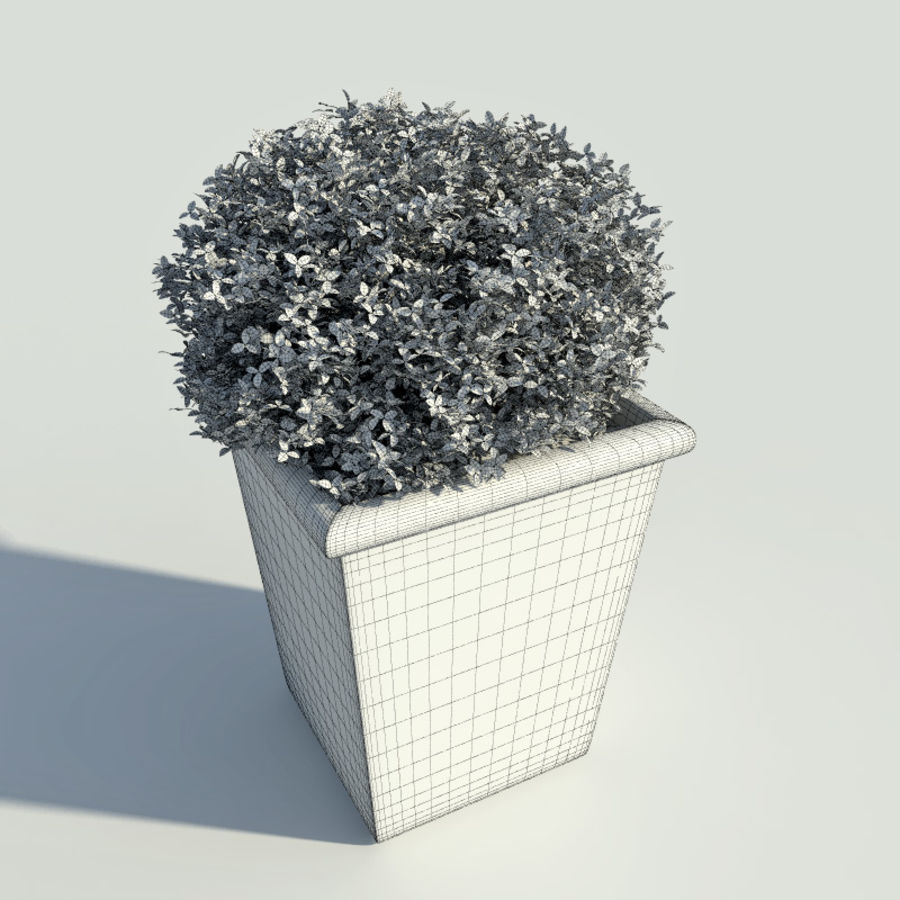 Bushes in pots 2 royalty-free 3d model - Preview no. 5