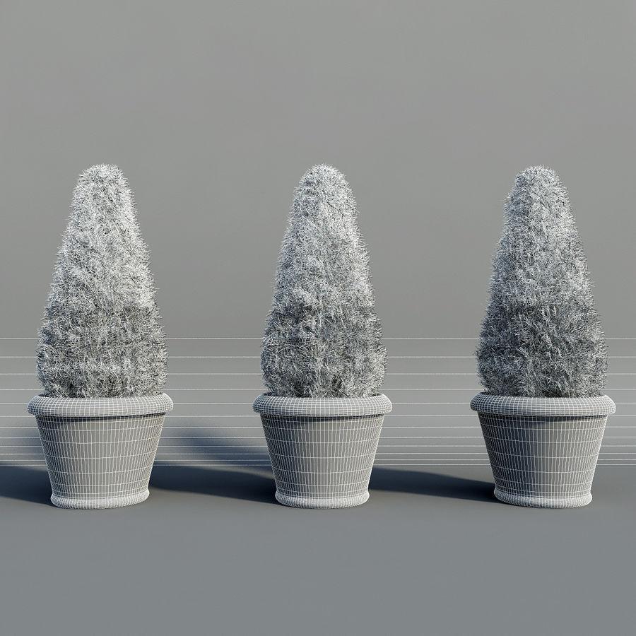 Tannenpflanzen in Töpfen royalty-free 3d model - Preview no. 7