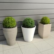 Krzewy w doniczkach 3 3d model