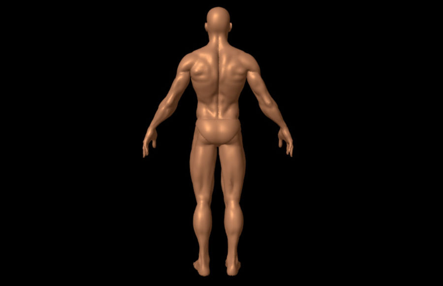Sexy Male Body - Male Human Anatomy royalty-free 3d model - Preview no. 3