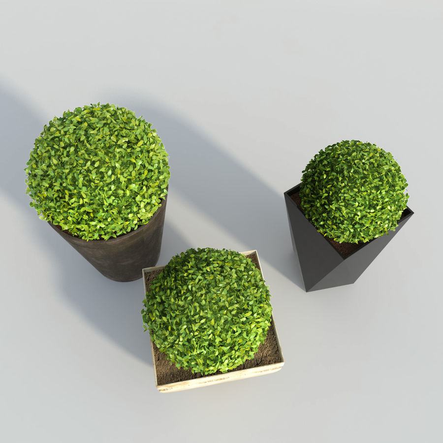 Shrubs in Pots royalty-free 3d model - Preview no. 4