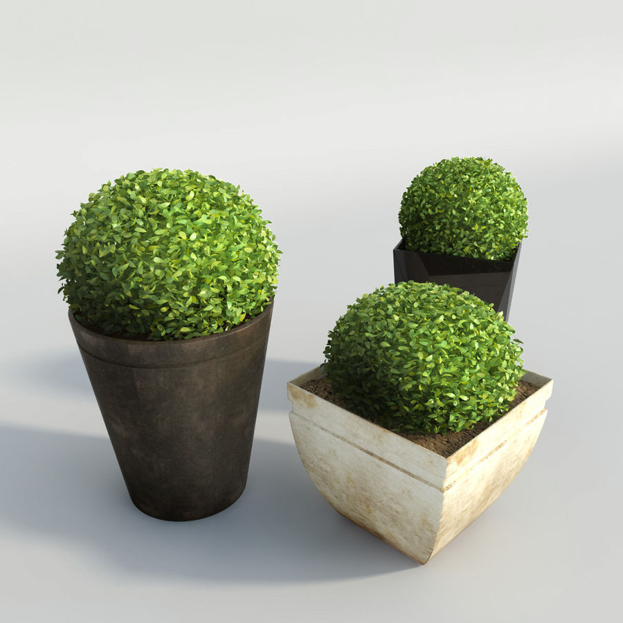 Shrubs in Pots royalty-free 3d model - Preview no. 3
