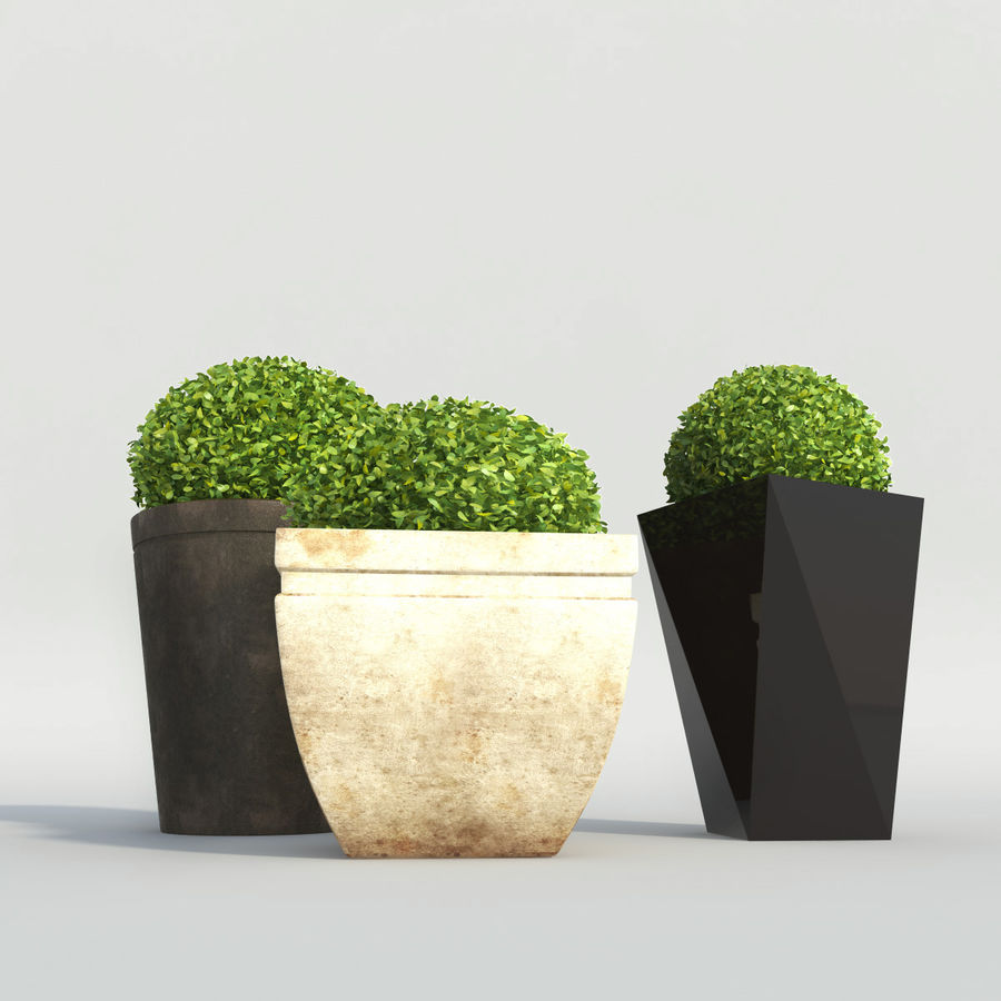 Shrubs in Pots royalty-free 3d model - Preview no. 5
