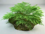 Fern bracken Pteridium 3d model