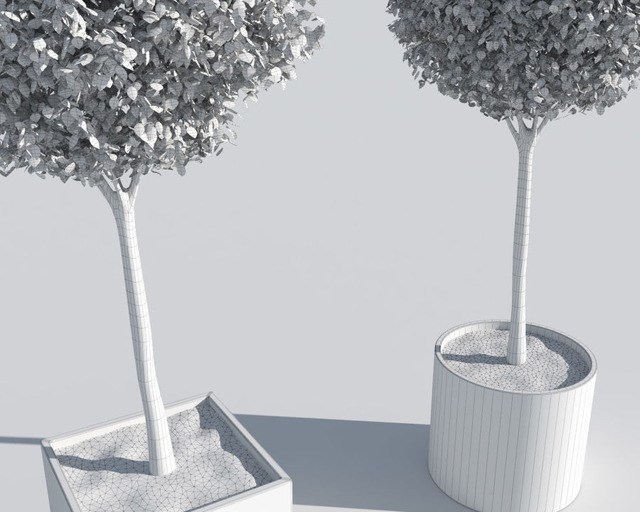 Outdoor Plants 2: Boxwood Trees royalty-free 3d model - Preview no. 9