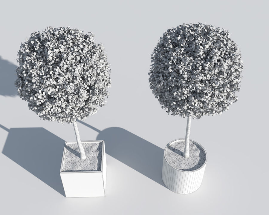 Outdoor Plants 2: Boxwood Trees royalty-free 3d model - Preview no. 8