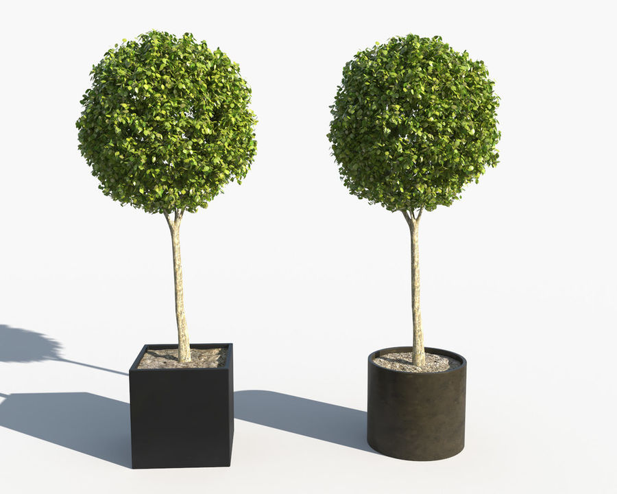 Outdoor Plants 2: Boxwood Trees royalty-free 3d model - Preview no. 3
