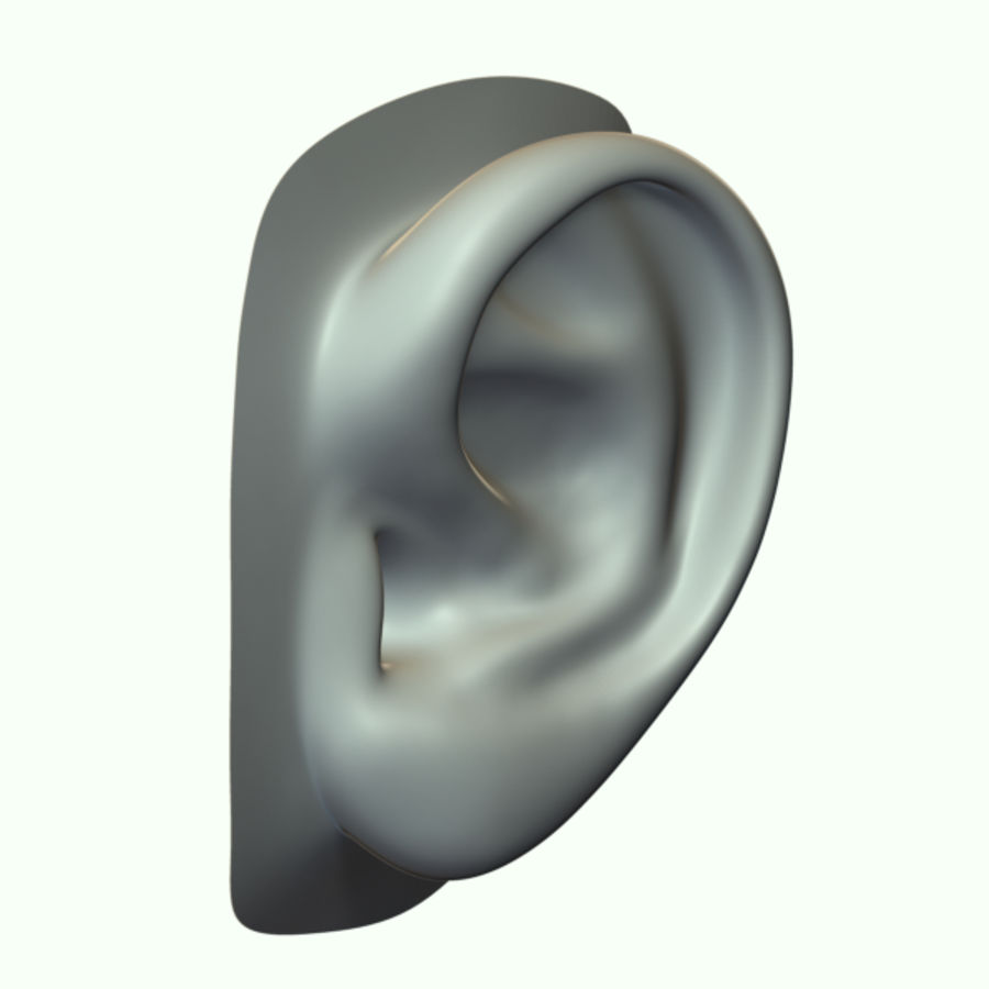 Ear royalty-free 3d model - Preview no. 7