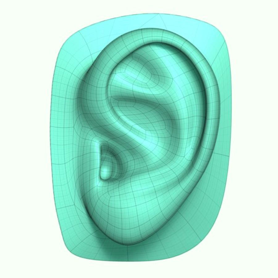 Ear royalty-free 3d model - Preview no. 3