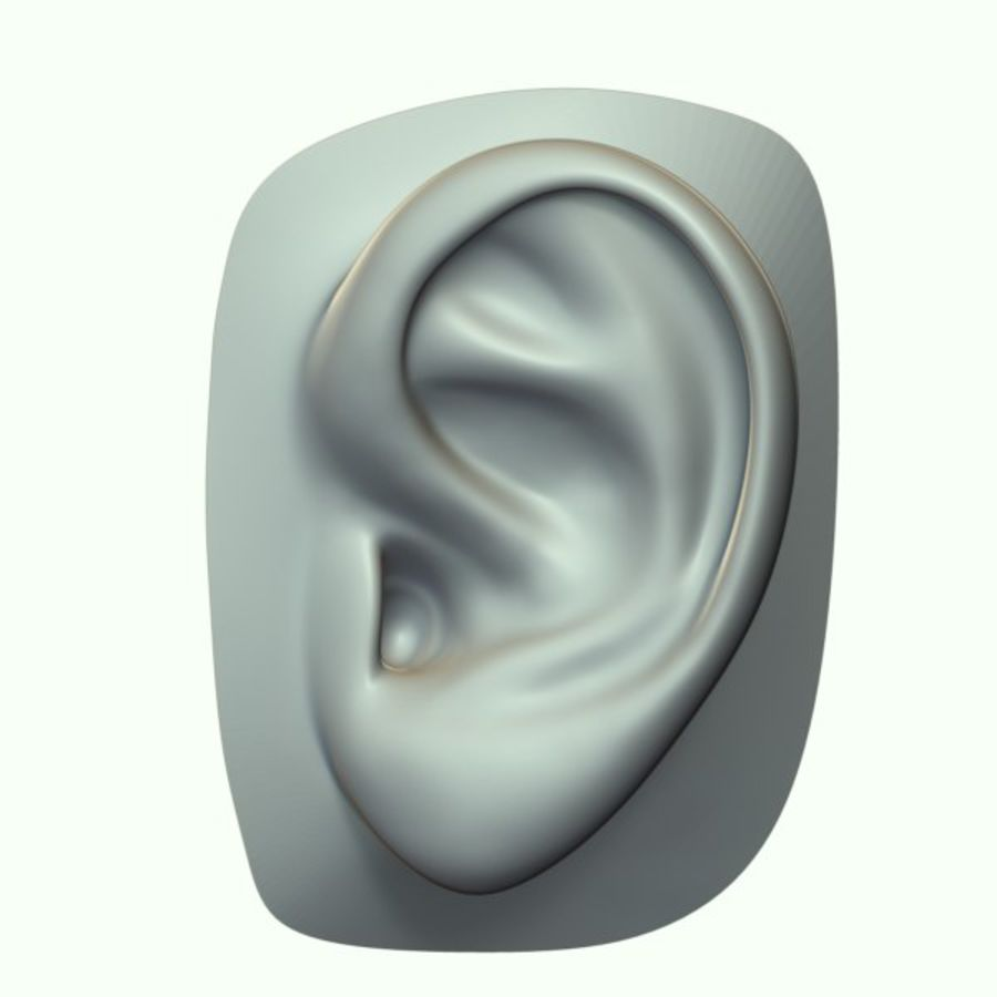 Ear royalty-free 3d model - Preview no. 8