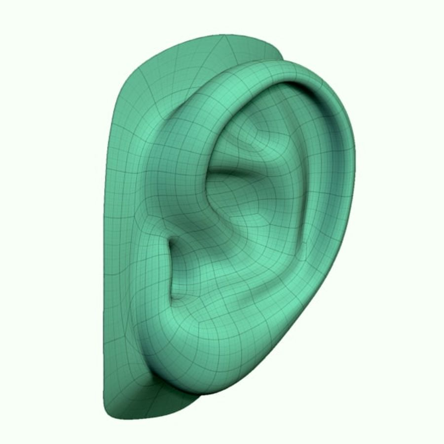 Ear royalty-free 3d model - Preview no. 6