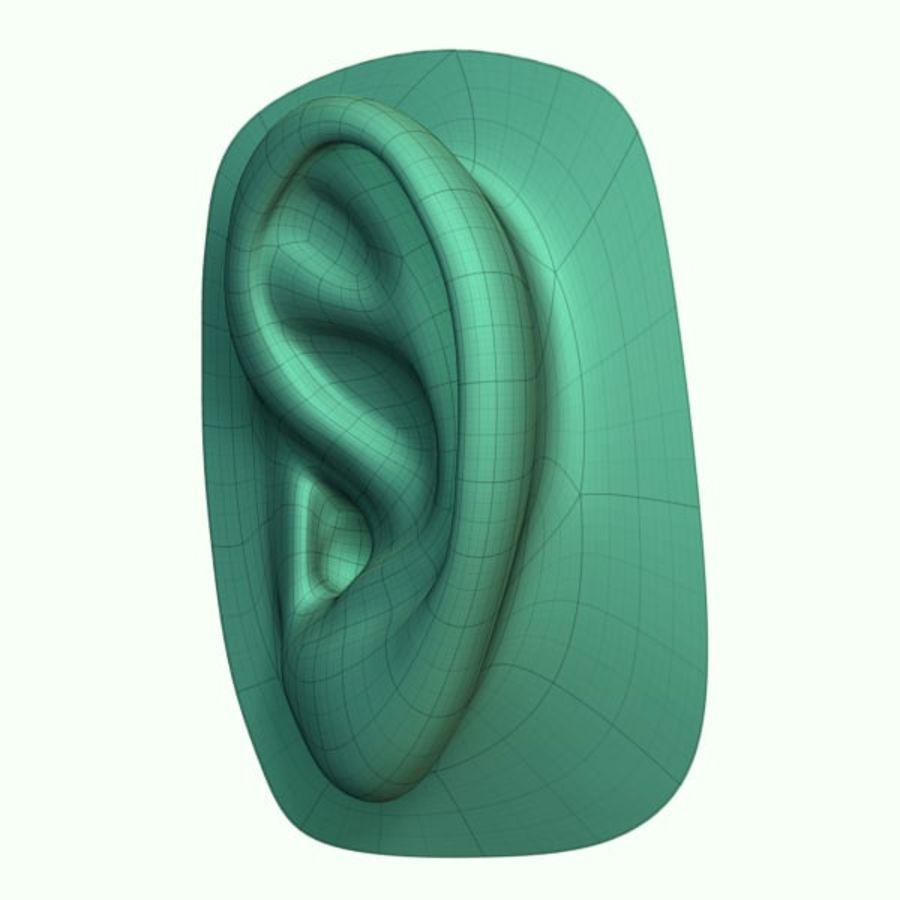 Ear royalty-free 3d model - Preview no. 5