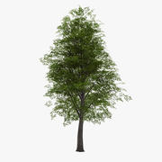 낙엽 022 3d model