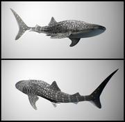 Китовая акула 3d model