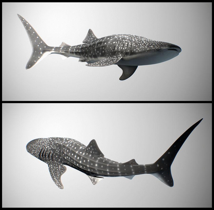 Squalo balena royalty-free 3d model - Preview no. 1