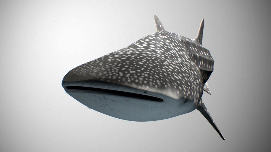 Squalo balena royalty-free 3d model - Preview no. 7