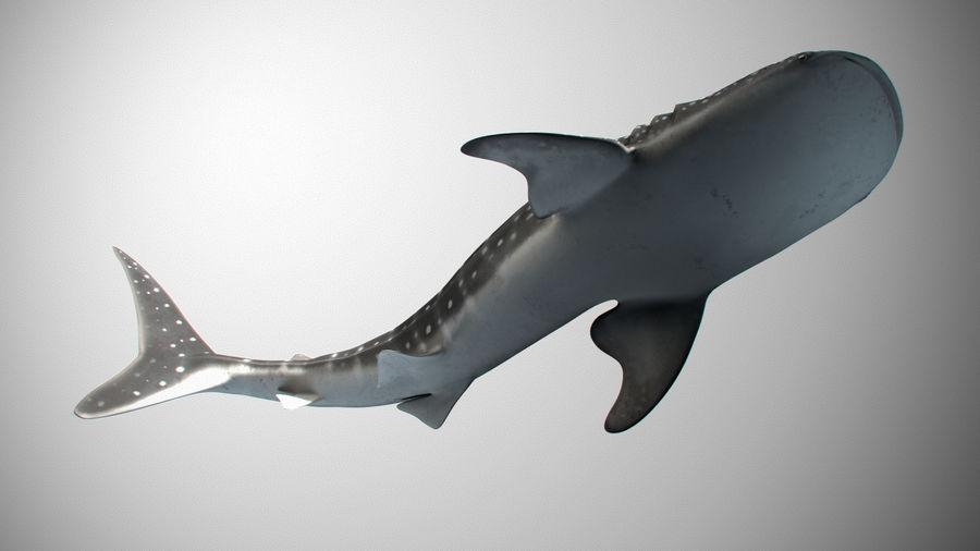 Squalo balena royalty-free 3d model - Preview no. 5