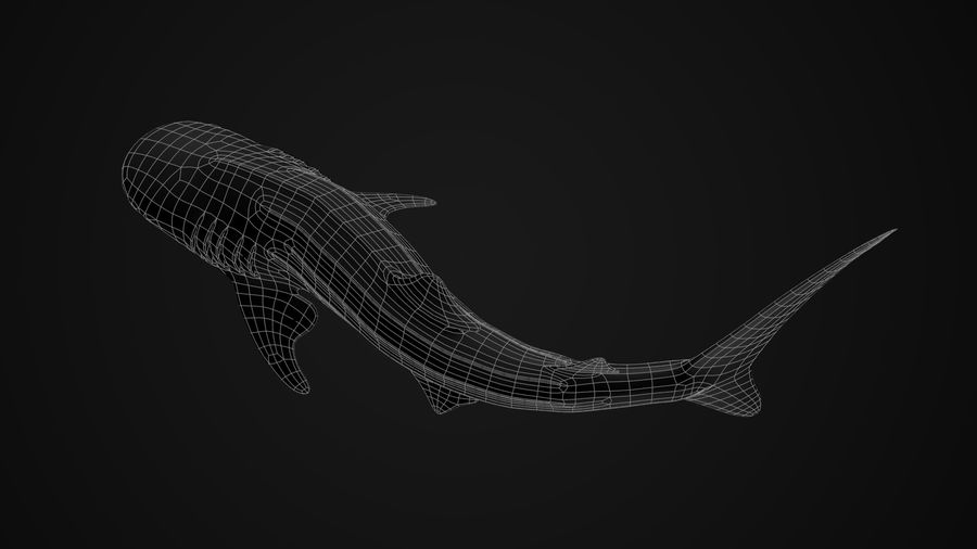 Squalo balena royalty-free 3d model - Preview no. 9
