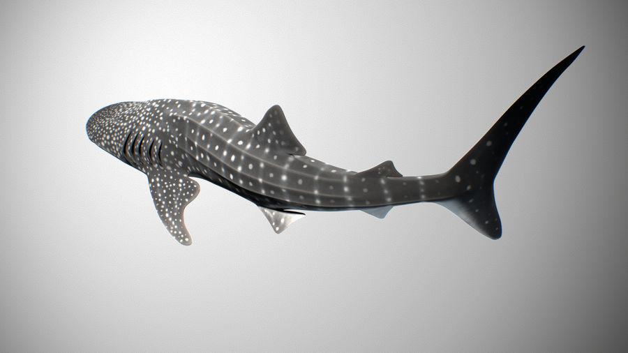 Squalo balena royalty-free 3d model - Preview no. 3