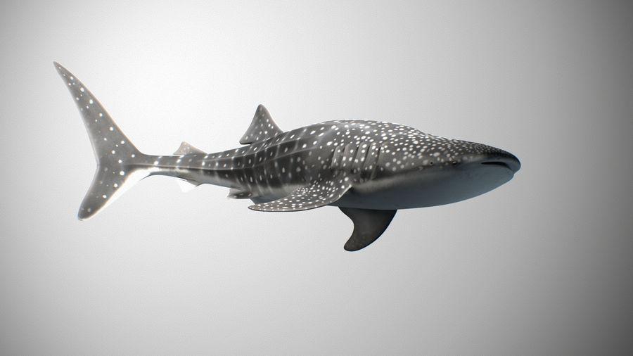Squalo balena royalty-free 3d model - Preview no. 2