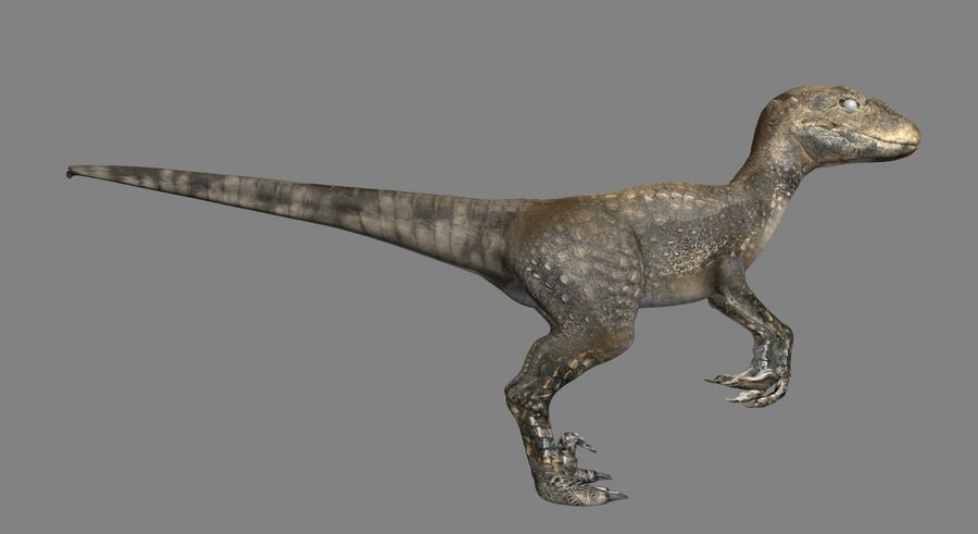Raptor royalty-free 3d model - Preview no. 4