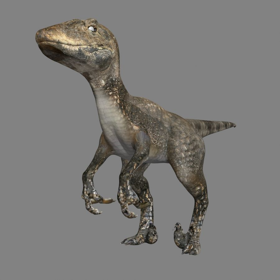 Raptor royalty-free 3d model - Preview no. 2