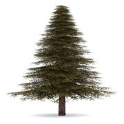 Fir Tree 3 Low Poly 3d model
