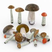 boletus   Mushroom 3d model