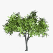 Elm Tree Low Poly 3d model