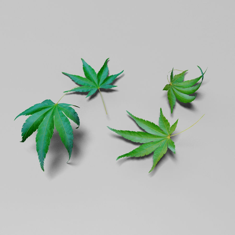 Japanese maple leaf (Acer palmatum) royalty-free 3d model - Preview no. 6