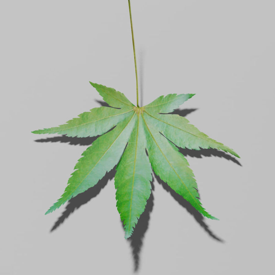 Japanese maple leaf (Acer palmatum) royalty-free 3d model - Preview no. 1