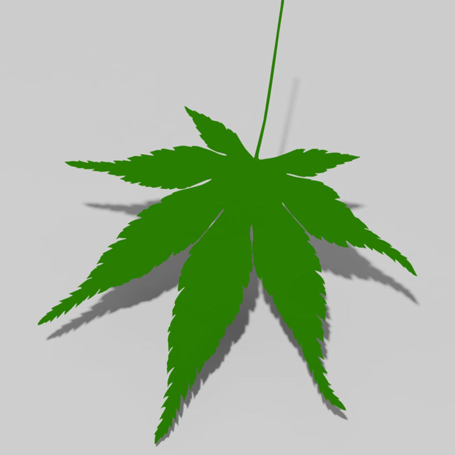 Japanese maple leaf (Acer palmatum) royalty-free 3d model - Preview no. 10