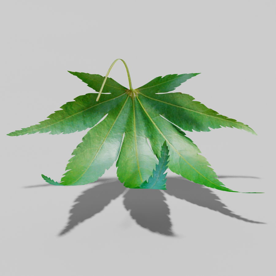 Japanese maple leaf (Acer palmatum) royalty-free 3d model - Preview no. 9