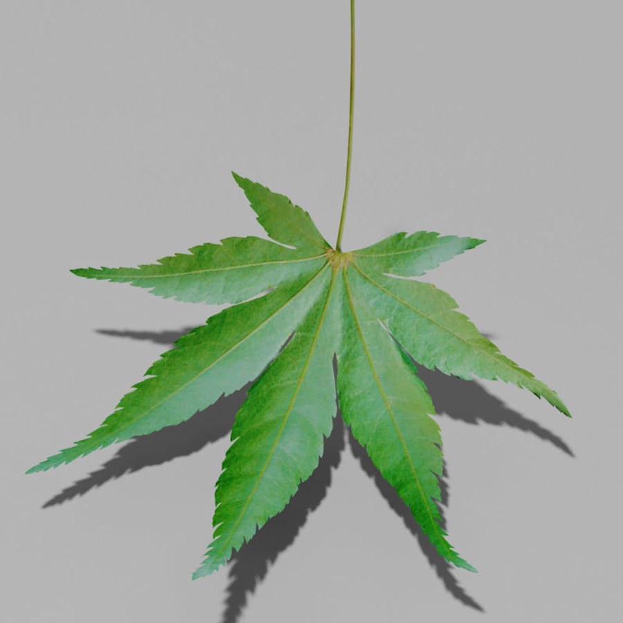 Japanese maple leaf (Acer palmatum) royalty-free 3d model - Preview no. 5