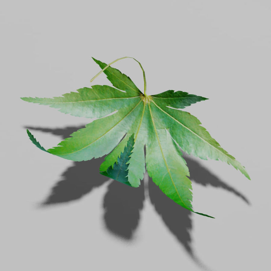 Japanese maple leaf (Acer palmatum) royalty-free 3d model - Preview no. 4
