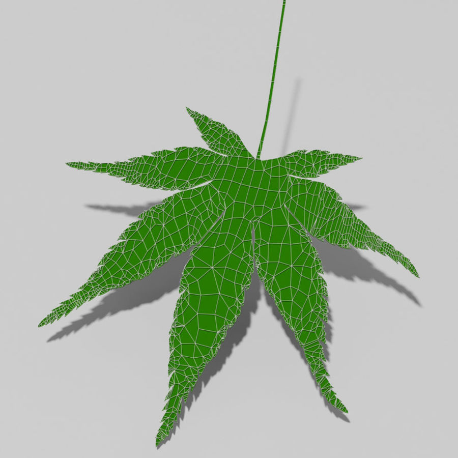 Japanese maple leaf (Acer palmatum) royalty-free 3d model - Preview no. 12