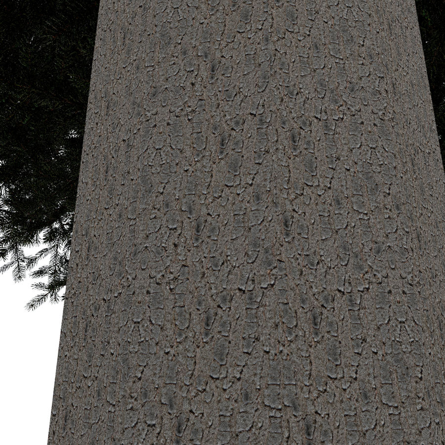 Fir Tree 1 Low Poly royalty-free 3d model - Preview no. 8