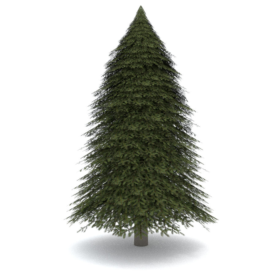 Fir Tree 1 Low Poly royalty-free 3d model - Preview no. 2