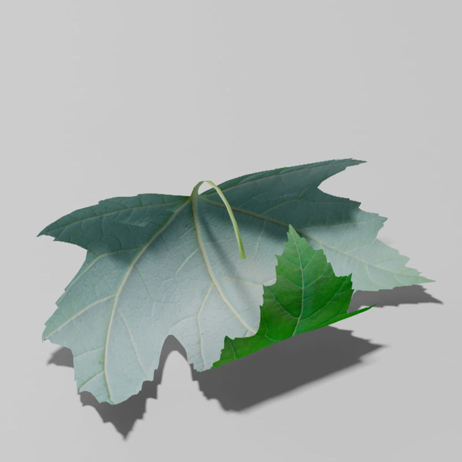 Sycamore maple leaf (Acer pseudoplatanus) royalty-free 3d model - Preview no. 9