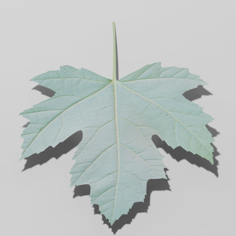 Sycamore maple leaf (Acer pseudoplatanus) royalty-free 3d model - Preview no. 2