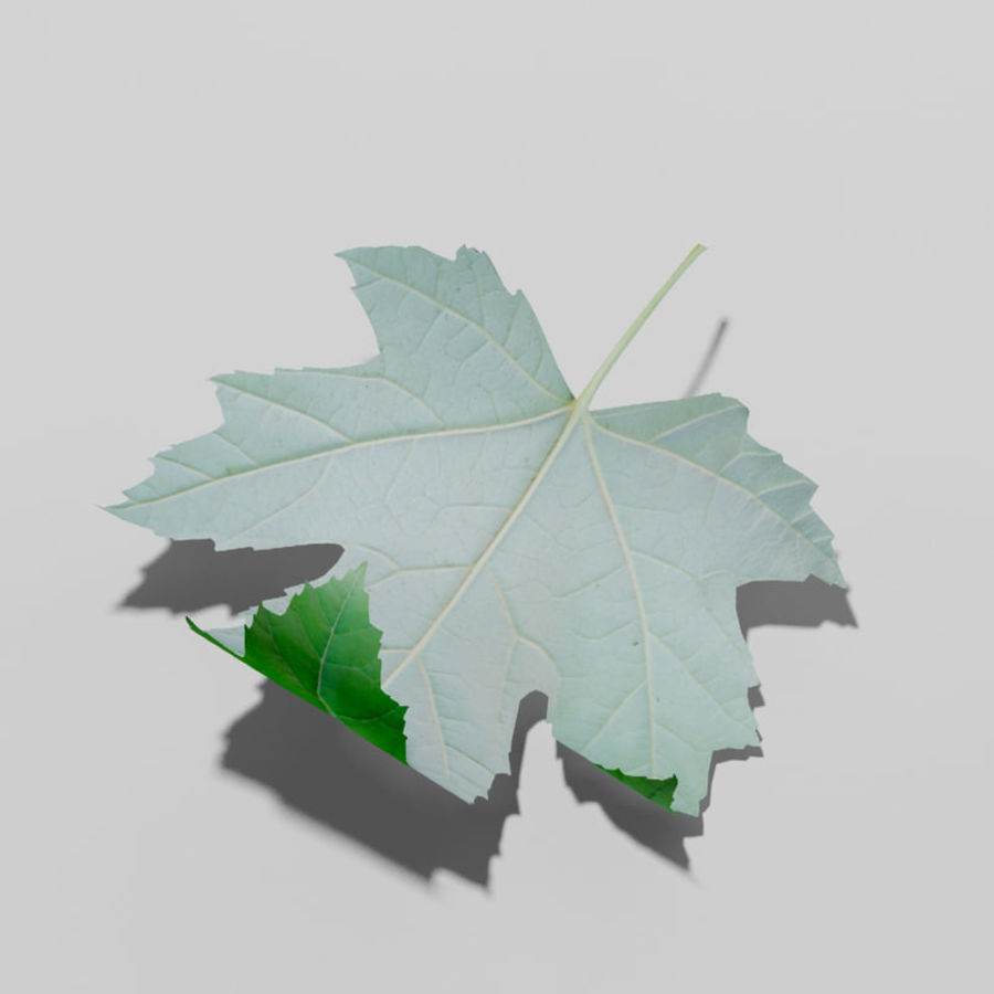 Sycamore maple leaf (Acer pseudoplatanus) royalty-free 3d model - Preview no. 10