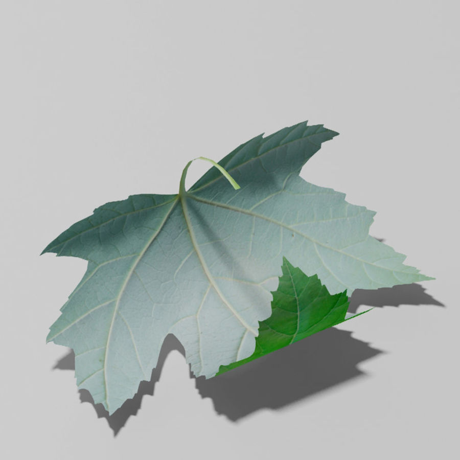 Sycamore maple leaf (Acer pseudoplatanus) royalty-free 3d model - Preview no. 5